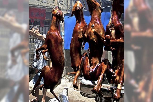 Festival ohne Hundefleisch