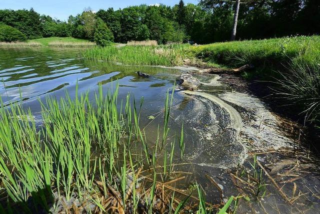 Gesundheitsamt rät: Nicht im Opfinger See baden