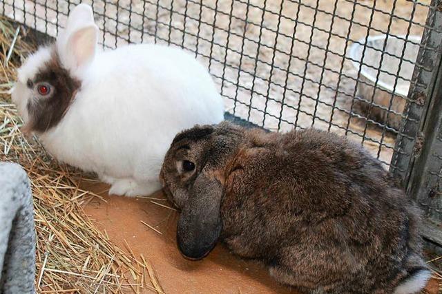 Diese Kaninchen suchen ein neues Zuhause