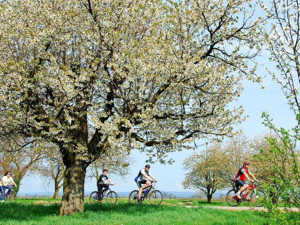 Natur und Genuss pur – Fahrradspaß bei Königschaffhausen  | Foto: Heidrun Weide-Gollnau (privat)