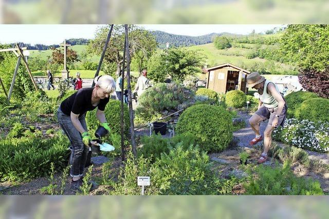Ein Dutzend Kräuterbegeisterter pflegt in Oberried liebevoll die heimischen Kräuter und Heilpflanzen