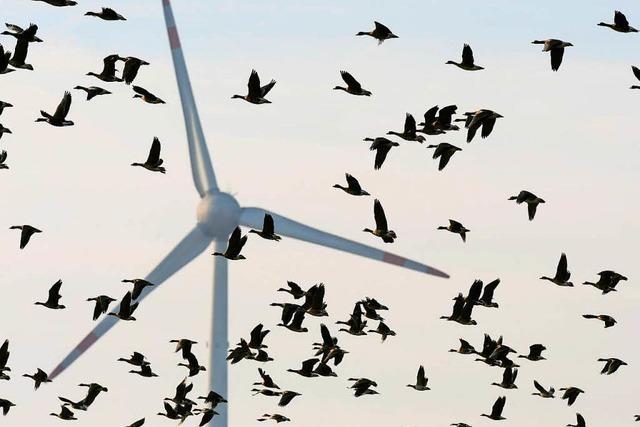 Rotmilan, Infraschall, Politik: So wird die Windkraft verhindert