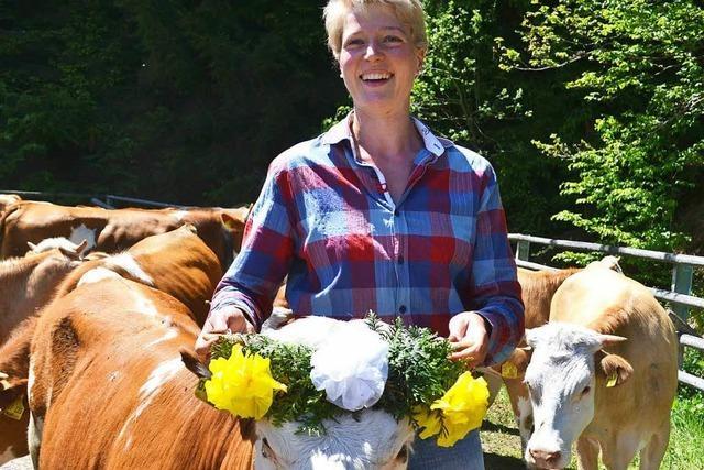 Rinder auf dem Weg ins grüne Sommerlager