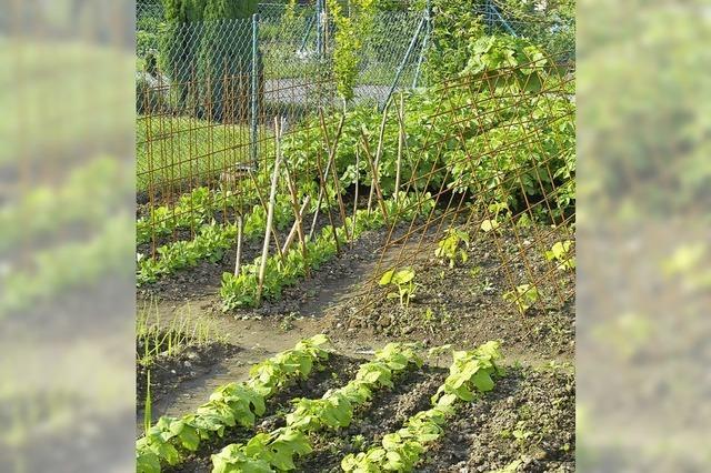 Richtungsstreit im Garten