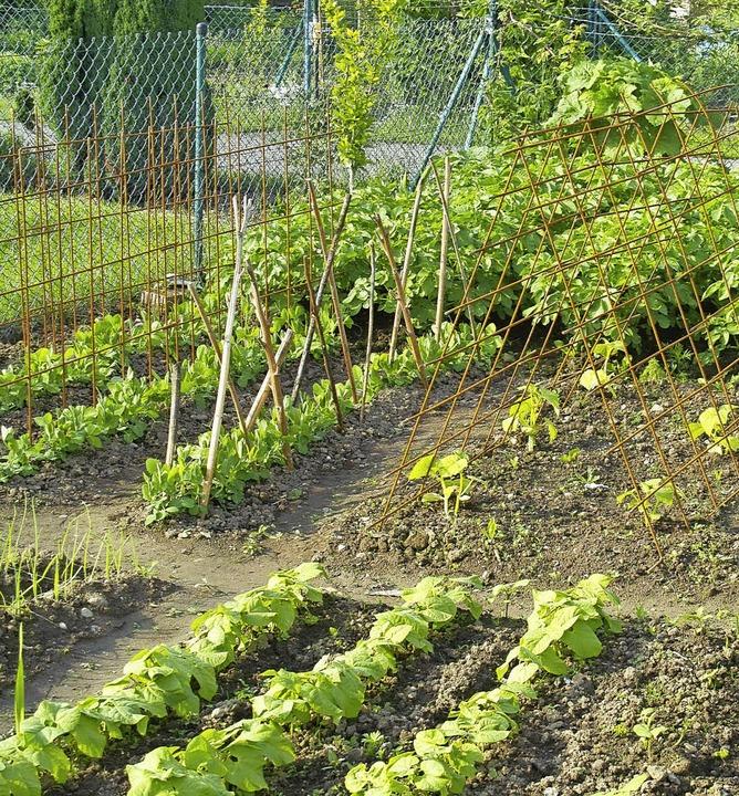 In Reih und Glied: Gemüsegarten     Foto: volker huber