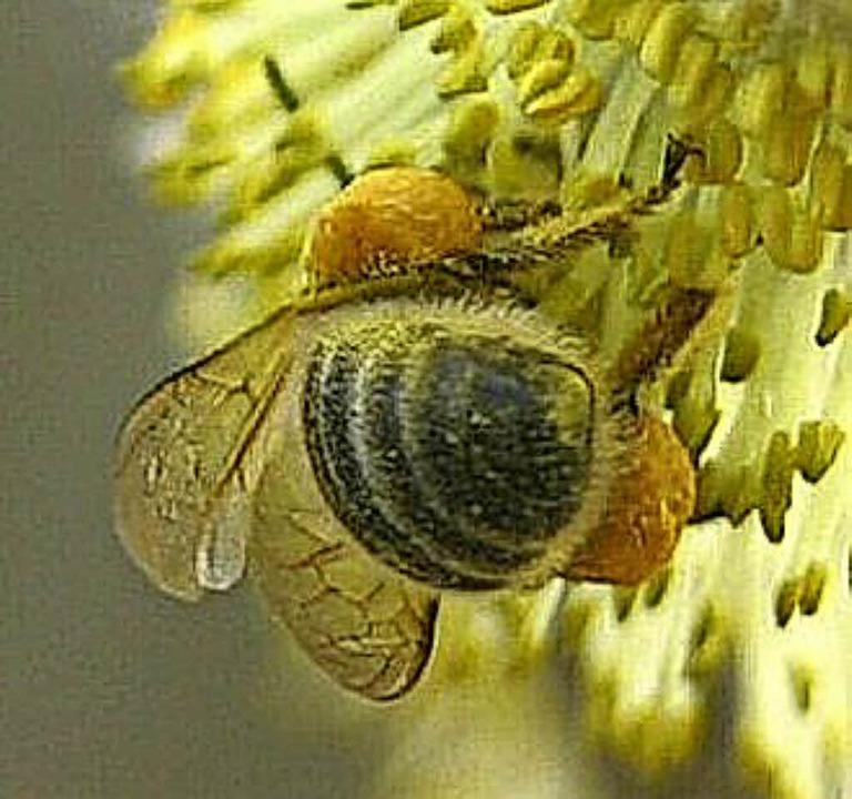 Bienen werden sich über die Aktion in Rickenbach freuen.    Foto: Nabu