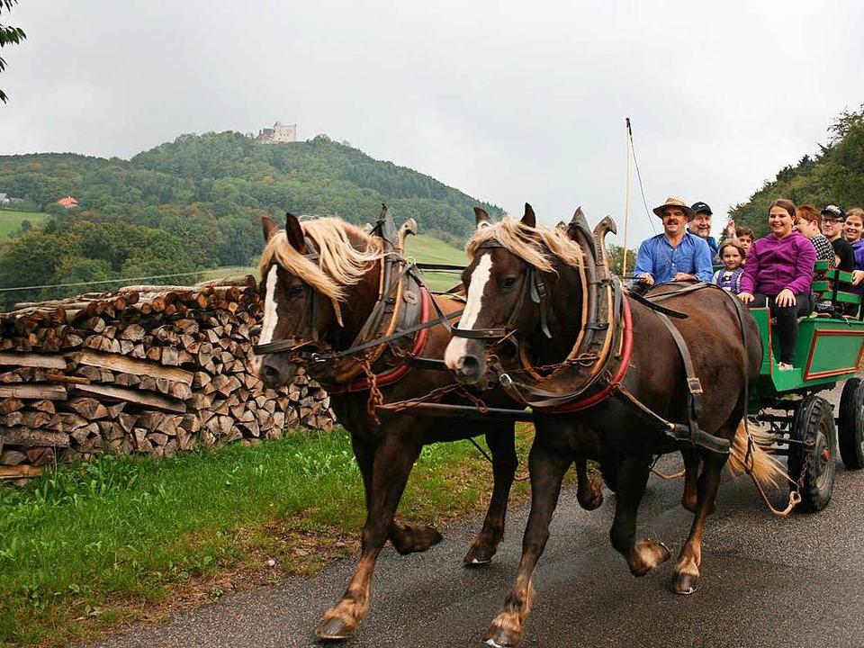 Rund ums Geroldseck kann man in Seelba...mäßig freitags mit der Kutsche fahren.    Foto: Theodor Weber