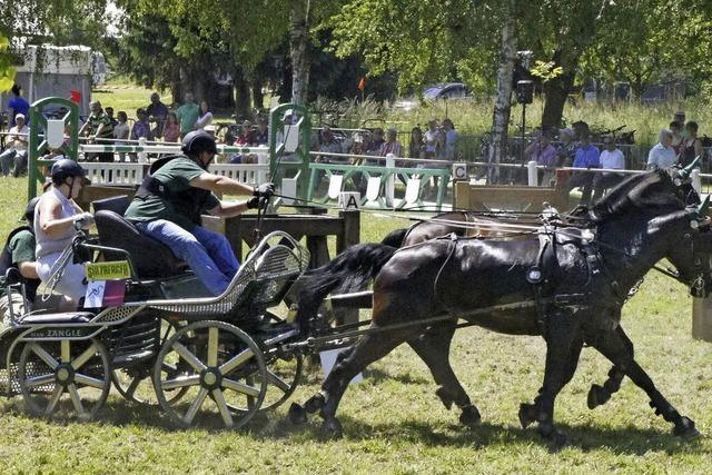 Die Vielfalt des Pferdesports bei Weisweils Reit- und Zuchtverein