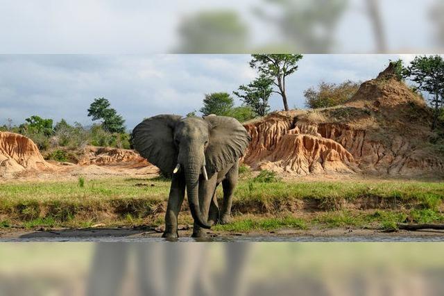 Vorsicht: Elefanten in der Lobby!