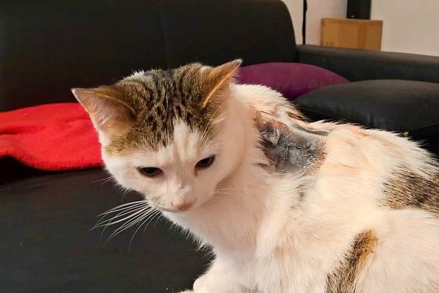 Lörrach: Unbekannter schießt mit Luftgewehr auf Katze