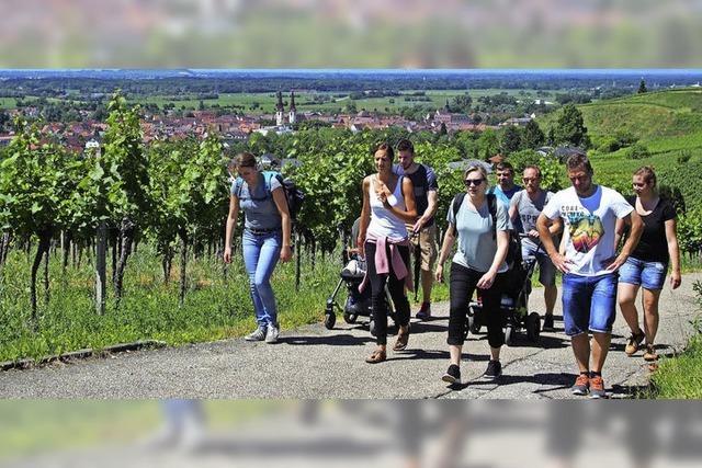Beste Bedingungen bei Weinwanderung