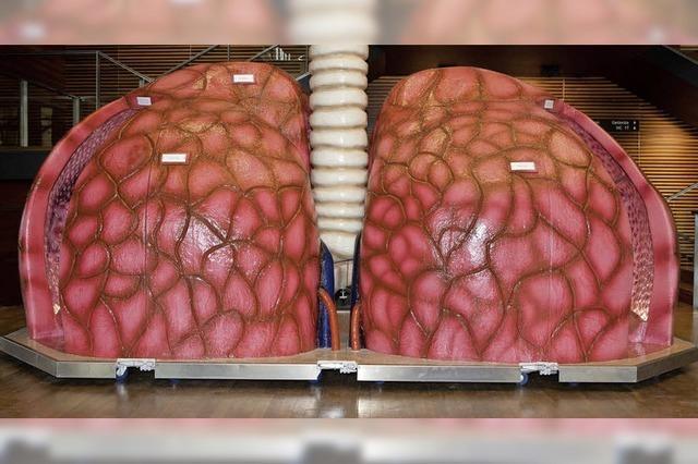 Die Lunge im Fokus