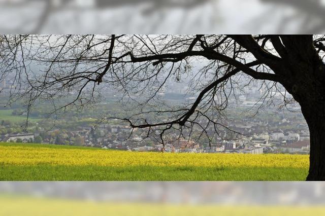 Tüllinger in Lörrach: Mit Wehmut in die Ferne blicken