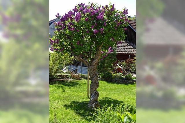 Ein Baum mit Drehwurm