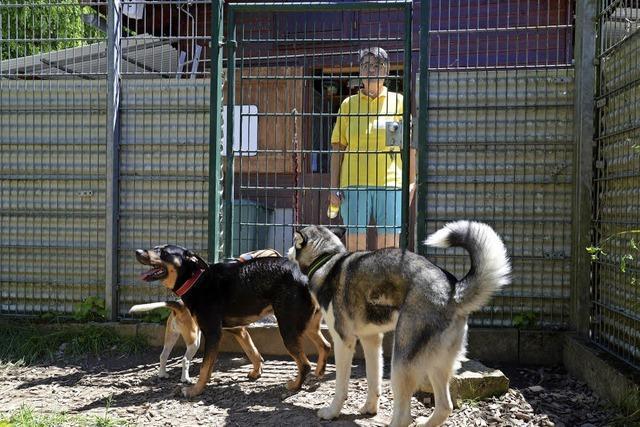 Sommerfest im Tierheim zog Hunderte Besucher an