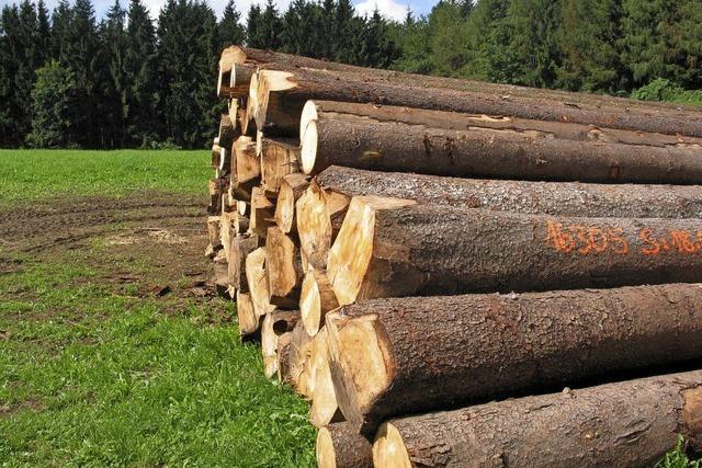 Befallene Bäume müssen weg