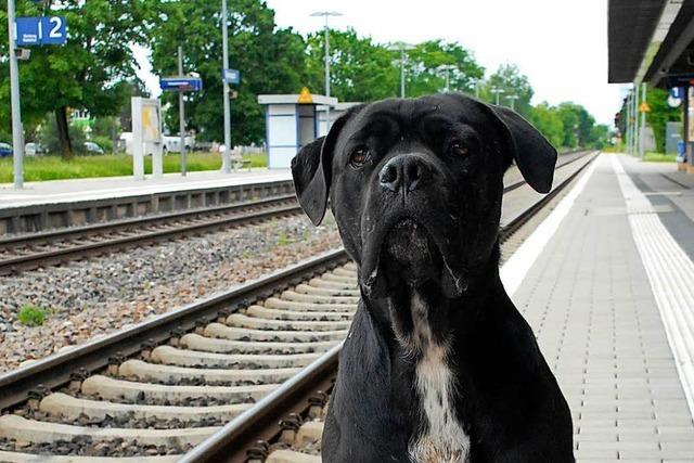 Das ist der schwarzfahrende Hund aus Grenzach