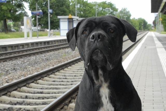 Lörrach: Polizei nimmt schwarzfahrenden Hund fest