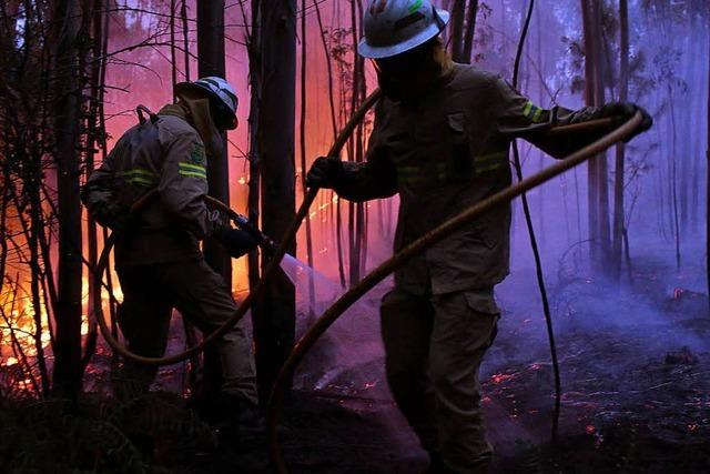 Mehr als 60 Tote bei Waldbrand in Portugal