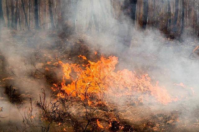 Wetterdienst warnt vor hoher Waldbrandgefahr – Forstamt gibt Verhaltenstipps