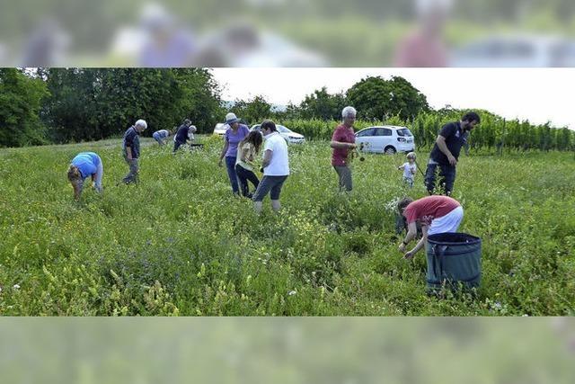 Insektenrückgang in Tutschfelden ist nicht zu übersehen