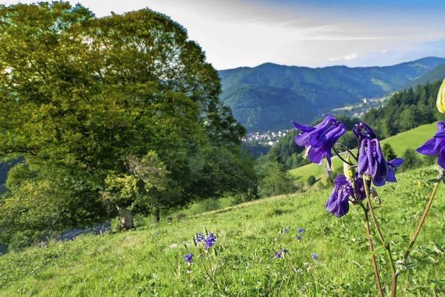 Sommerlicher Blick ins Tal