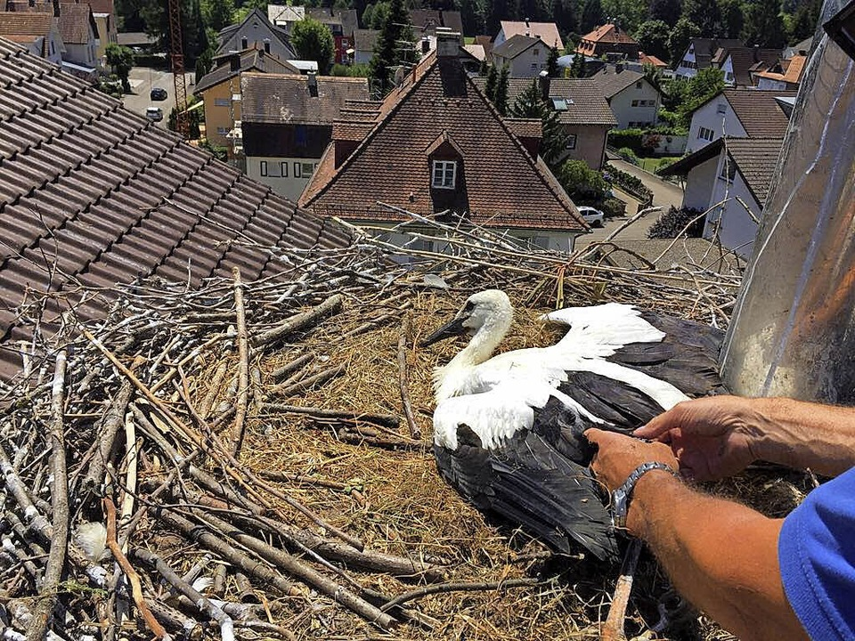 Nur mit Hilfe der Drehleiter konnten d...Storchenest auf St. Michael erledigen.    Foto: Feuerwehr