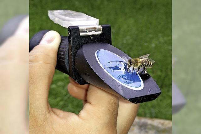 Einblicke ins Bienenleben
