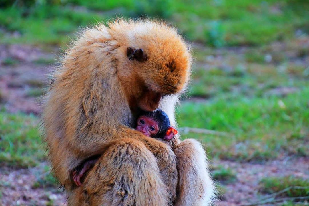 Kuscheln mit der Mama    Foto: Andrea Knoll