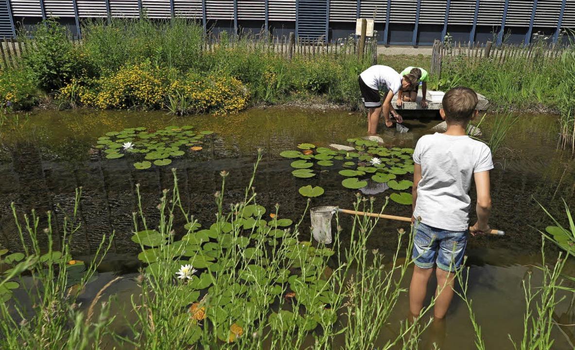 Sechstklässler sammeln Teichbewohner, um sie zu bestimmen.   | Foto: Dorothee Philipp