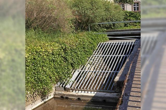 Zweifel am Hochwasserschutz in Hauingen