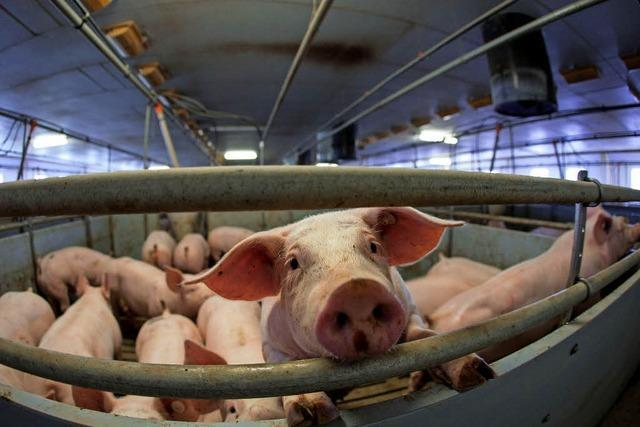 Die deutsche Fleischindustrie wächst - sehr zum Ärger ausländischer Konkurrenten