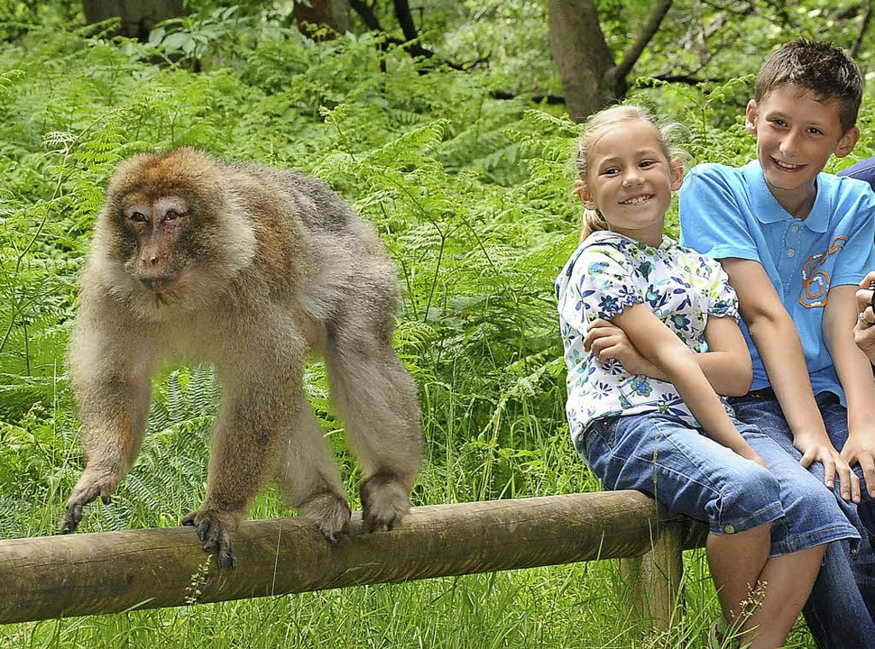 Tierische Begegnungen  | Foto: Promotion Affenberg