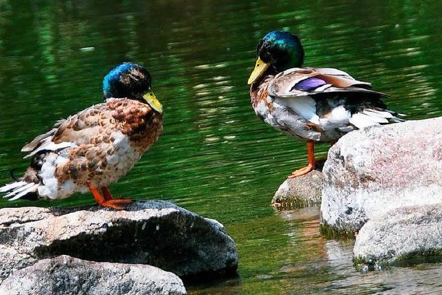 Aus den Flüssen des Landkreises Lörrach darf kein Wasser mehr entnommen werden