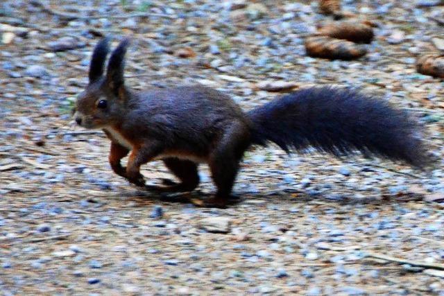 Vollbremsung für Eichhörnchen – Auffahrunfall auf B 294