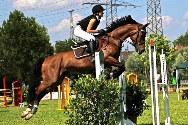 Turnier mit 500 Pferden