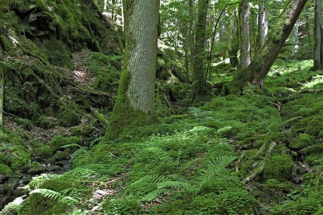 BUND bietet Erlebnisprogramm in den Kreisen Lörrach und Waldshut