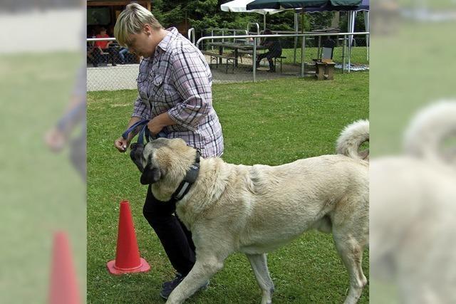 Übungen, die Mensch und Hund Spaß machen
