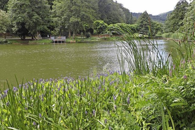 Raubfische und eine Umwälzpumpe sollen helfen
