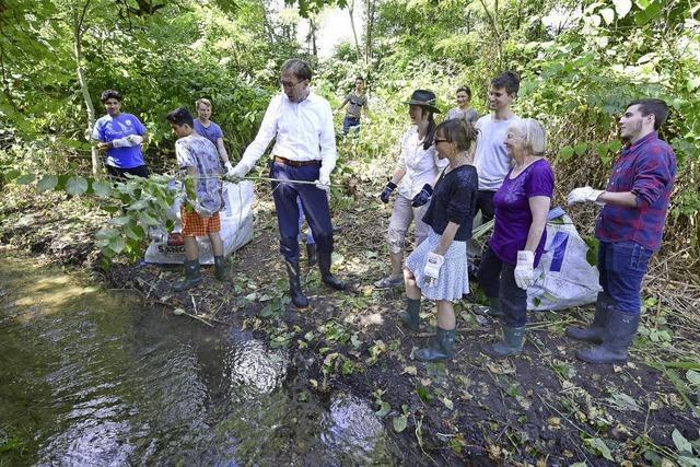 Freiburger Bachpaten kümmern sich um die Flussläufe der Stadt und bekämpfen Neophyten