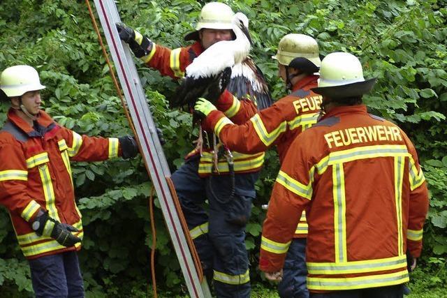 Feuerwehr birgt verletztes Tier