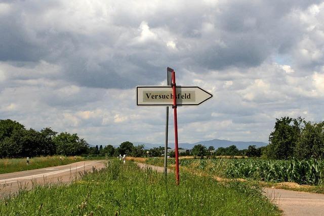 Der Maiswurzelbohrer bereitet wieder Sorgen