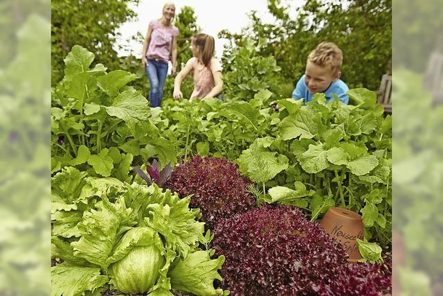 Gemüse, Obst, Beeren