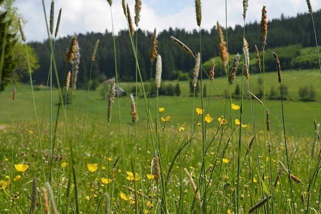 Wie Kartierer schützenswerte Grünflächen festlegen – und Landwirte davor zittern