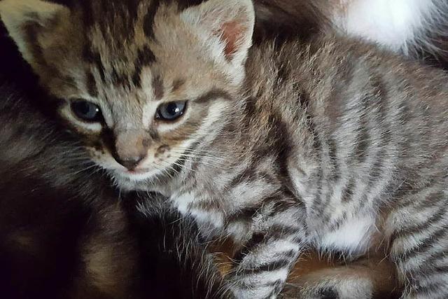 Katze Momo bekommt Junge