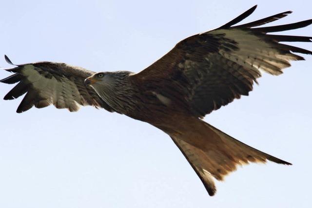 Federdieben werden die Flügel gestutzt