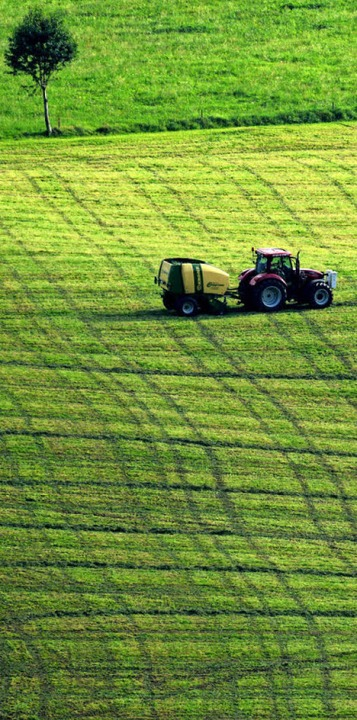 Feldarbeit bei Oberried  | Foto: dpa