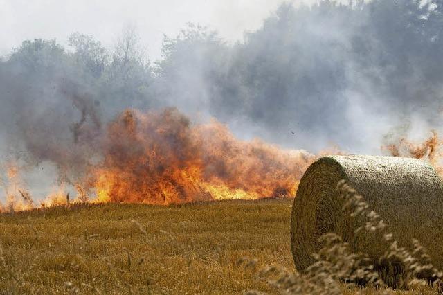 Sechs Hektar Stoppelfeld werden Raub der Flammen