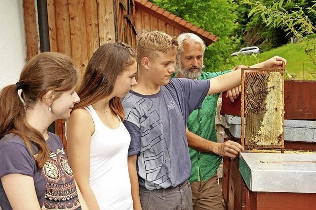 Da summten die Bienchen