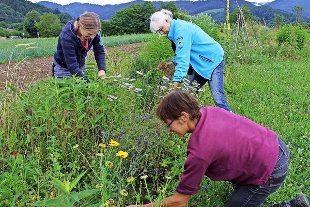 Lebensgarten Dreisamtal wächst und gedeiht